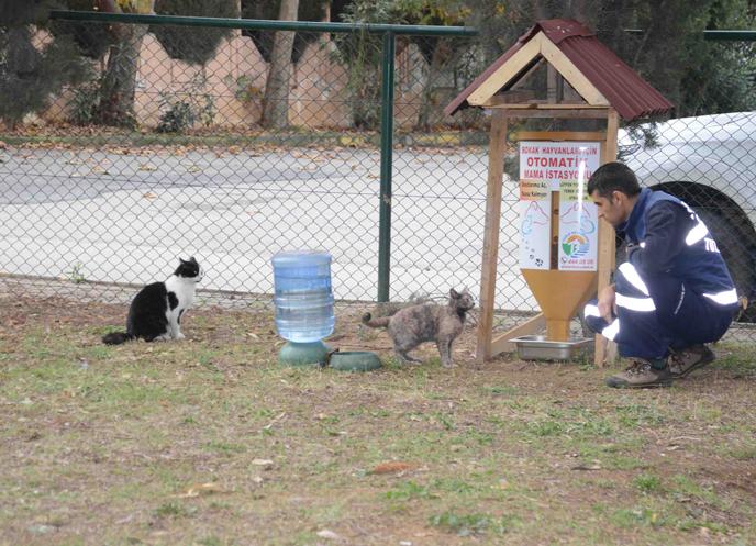 Tuzla Belediyesi, Sokak Hayvanlarının Yemlik ve Suluklarını Yeniliyor