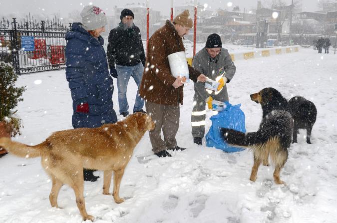 Tuzla Belediyesi Sokak Hayvanlarını Unutmuyor